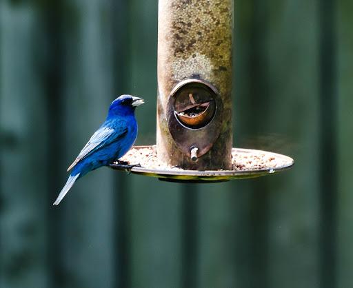 Birds of Our Neighborhood