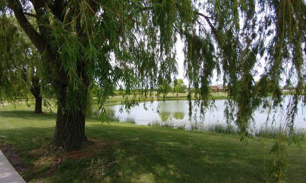 Walking Under Willows