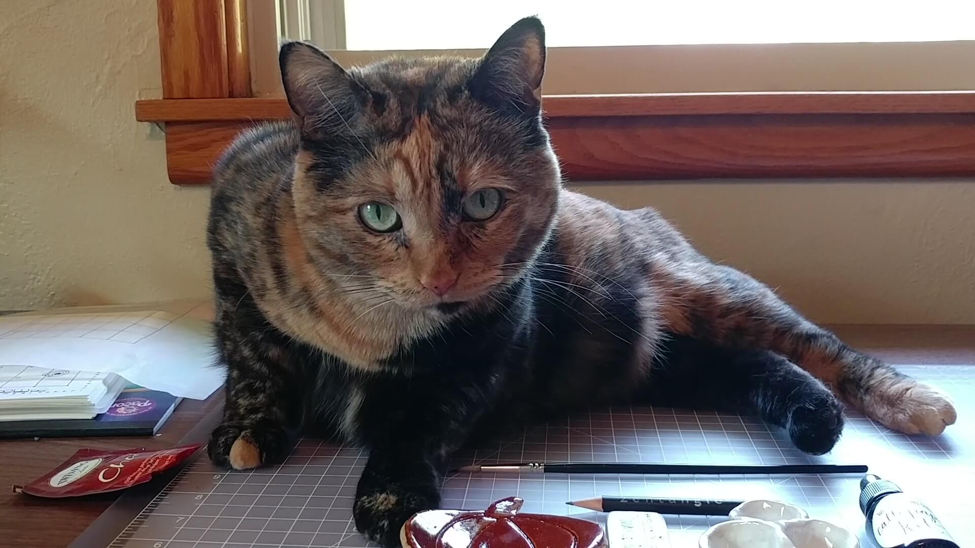 Izzy the tortie cat sitting on my desk asking what's up with you?