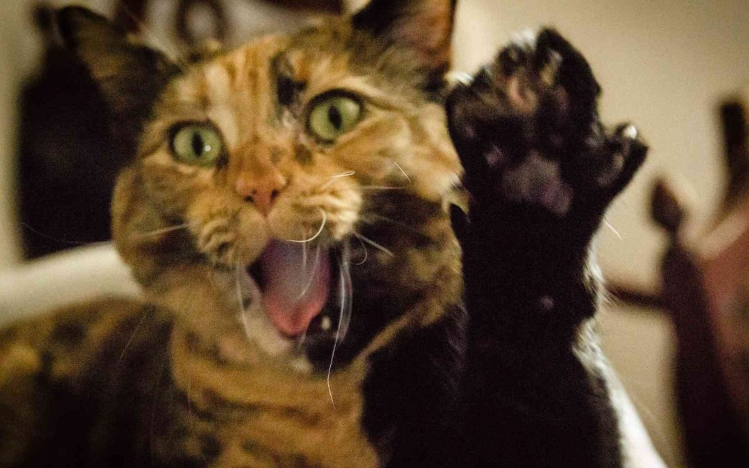 Cat with paw up and mouth open like she is screaming featured image for Brain Cancer Rant blog post