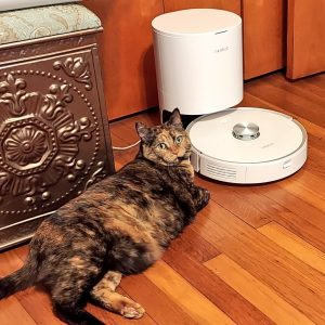 Izzy lies on the floor next to Chad, our new robot vacuum